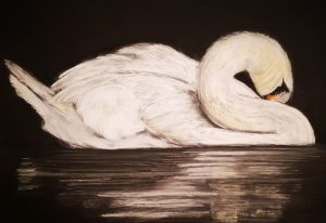 'Swan at repose' - soft pastels on Clairefontaine PastelMat